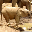 Stock Photo: Elephant at waterhole
