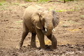 Elephant at waterhole — Stock Photo