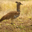 Southern african birds — Stock Photo