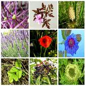 Yabani bitkiler — Stok fotoğraf