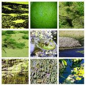 Algae collage — Stock Photo