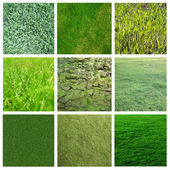 Green grass collage — Stock Photo
