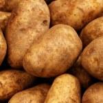 Russet Potatoes Close Up — Stock Photo #29982489