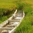 Rice Paddy Irrigation Canal — Stock Photo #34040115