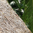 Thatch Roof & Palm Fronds — Stock Photo