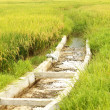Rice Paddy Irrigation Canal — Stock Photo