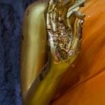 Hand image of buddha — Stock Photo