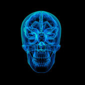 Human brain X ray - front view — Stock Photo