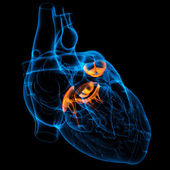 3d render Heart valve — Foto Stock