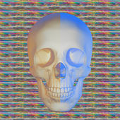 Skulls and color — Stock Photo