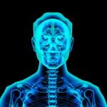 3d rendered illustration - male brain — Stock Photo #34805053