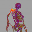 3d render human of shoulder pain - bottom view — Stock Photo