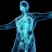 3d render blue lymphatic system - right front view — Stock Photo
