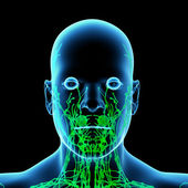 The Lymphatics of the Head - front view — Stock Photo