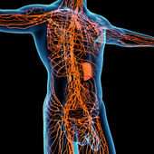 3d render orange lymphatic system - side view — Foto de Stock