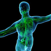 3d render green lymphatic system - back view — Stock Photo