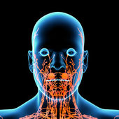 3d render orange lymphatic system - front view — Foto de Stock