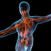 3d render orange lymphatic system - back view — Stock Photo