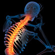 Stock Photo: Skeleton of mwith backbone