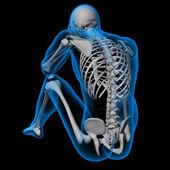 Skeleton of the man — Stock Photo
