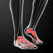 Human Skeletal Feet - front view — Stock Photo