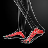 Human Skeletal Feet - side view — Stock Photo