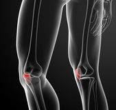 3d render illustration patella — Stock Photo