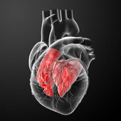 3d render Heart atrium - back view — Stock Photo