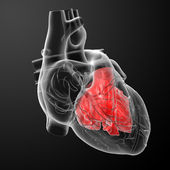 3d render Heart atrium - front view — Stock Photo