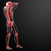 3d renderizado esqueleto vermelho - vista lateral — Fotografia Stock
