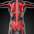 3d rendered skeleton - close up back view — Stock Photo