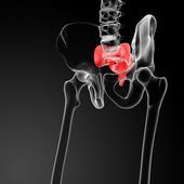 3d render illustration sacrum bone — Stock Photo