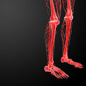 3d render lymphatic system visible leg — 图库照片