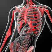 3d render skeleton by X-rays in red — Stock Photo