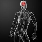 Human brain X ray — Stock Photo