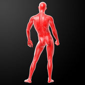 3d render human anatomy — Stock Photo