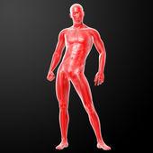 3d vykreslení lidské anatomie — Stock fotografie
