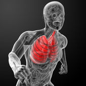 Human respiratory system in x-ray — Stock Photo