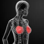 Radiografía de pecho femenino anatomía — Foto de Stock