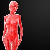 女性の 3 d レンダリングされた図 — ストック写真