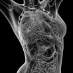 Female anatomy — Stock Photo #45821139