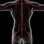 Постер, плакат: Nervous system
