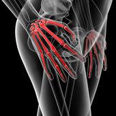кости руки — Стоковое фото