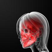 кости черепа — Стоковое фото