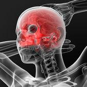 Osso del cranio — Foto Stock