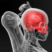 Schädelknochen — Stockfoto