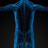 Erkek kasları — Stok fotoğraf