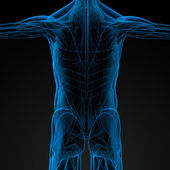 Manliga muskler — Stockfoto