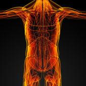 Músculos masculinos — Foto Stock
