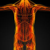 男性の筋肉 — ストック写真